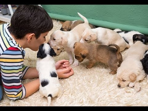 How to choose a puppy in Hindi | choose best puppies for you