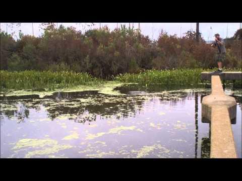 Fishing for Alligator Gar in the morning