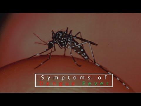 Dengue | Symptoms of Dengue | Symptoms of Dengue Fever