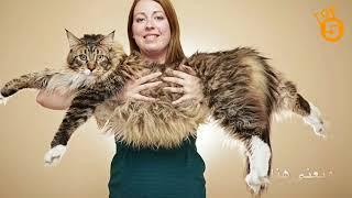 Download #top 5 اضخم حيوانات العالم Video