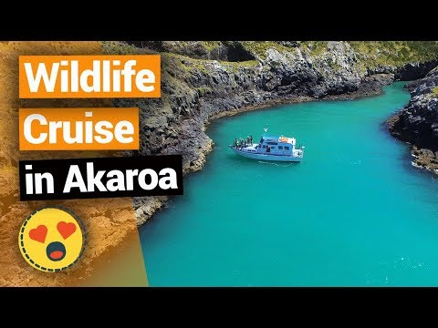 Wildlife Cruise in Akaroa – New Zealand's Biggest Gap Year – Backpacker Guide New Zealand