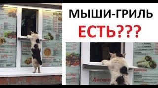 Download Лютые приколы. Кот покупает шаурму и ПЛОСКАЯ ЗЕМЛЯ Video