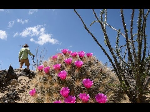 Big Bend National Park...Hiking ..canoeing...cactus blooms...