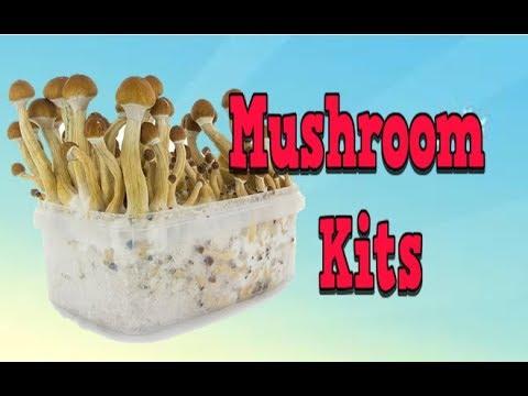 Mushroom Kits, Mushroom Garden, Mushrooms In Garden, Mushrooms Growing House, Mushrooms Growing