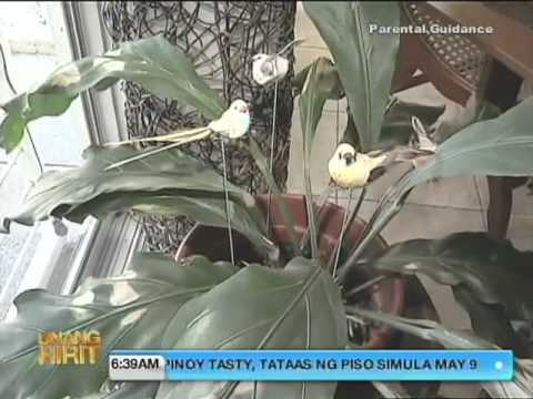Unang Hirit: How to Make Your House Cooler!