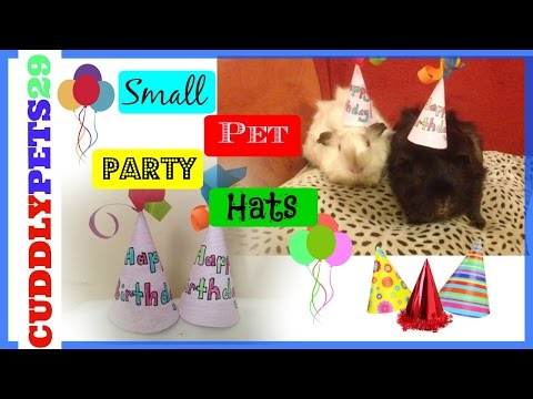 How to make Birthday Hats for Small Pets