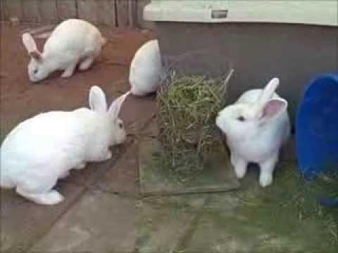 Our Rabbit Meat Pen!