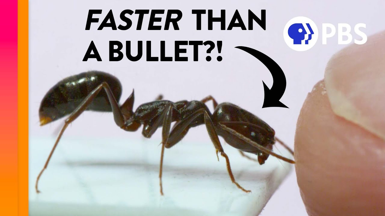 The Fastest Animals Are Way Faster Than You Think
