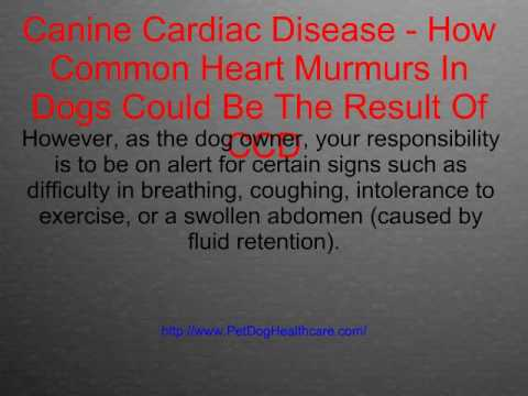 Canine Cardiac Disease How Common Heart Murmurs In Dogs Could Be The Result Of CCD