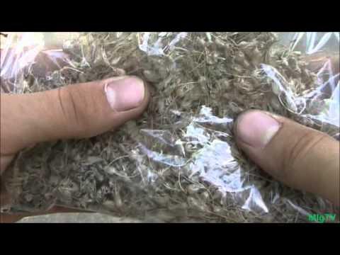 How to Save Onion Seeds - Seed Saving Series