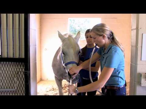 Equine Training:   Nasogastric Intubation