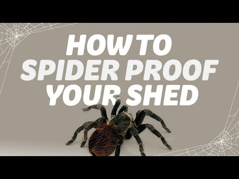 Spider repellent shed - How to spider proof your shed