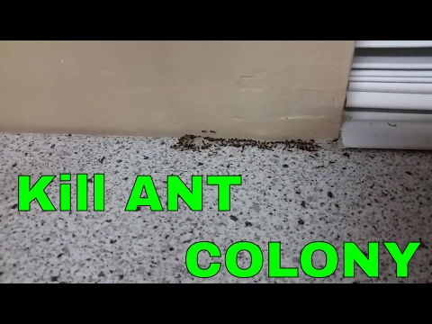 Get rid of ants in your kitchen.  Kill the whole colony.