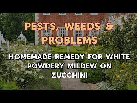Homemade Remedy for White Powdery Mildew on Zucchini