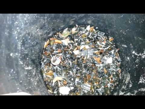 Nice haul of sharkteeth from sarasota county beaches
