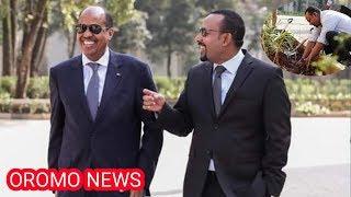 Oromo News Videos - 9tube tv