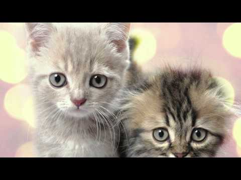 Roku Recommends - Puppies and Kittens Themes