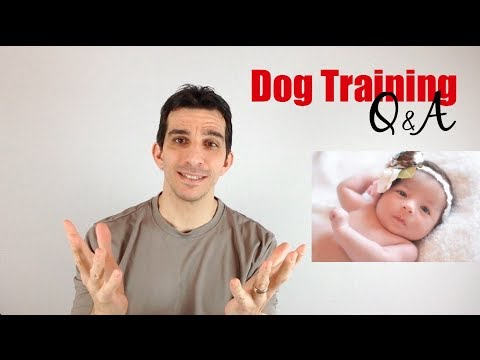 How to Introduce Your Dog to a Baby