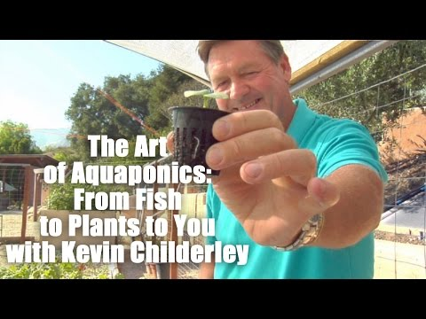 The Art of Aquaponics: From Fish to Plants to You with Kevin Childerley