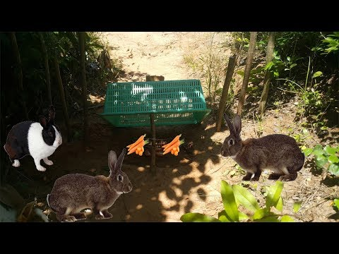 How To Catch Rabbit With Live Rabbit Trap-Amazing Deep Hole Quick Rabbit Trap Using Big Basket