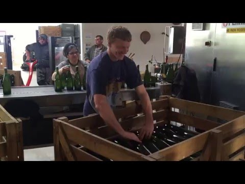 Packing Champagne bottles in boxes