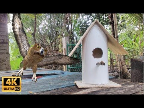 How to Make Bird House from PVC