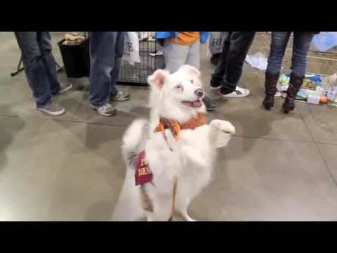 Deaf Dogs of Oregon at the 2012 Portland Pet Expo