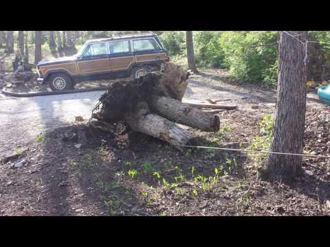 Removing tree stump, Using Harbor Frieght 12000 lb. winch
