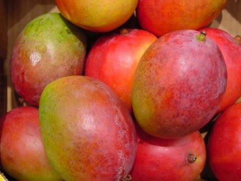 [HD Video] How to Grow a Haden Mango Tree - The Best Tasting Mango
