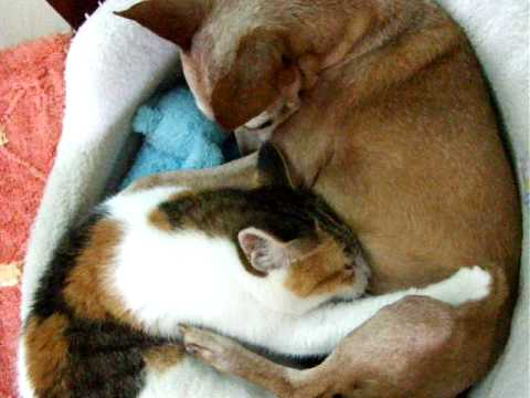 Xxx Mp4 Dog Breast Feeding Cat 3gp Sex