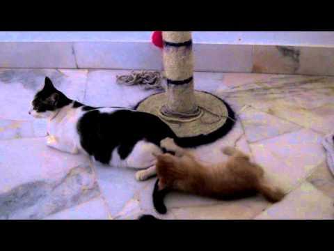Kitten caught a tail