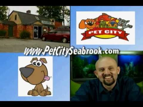 Pet City Seabrook NH - Stop your pets bad breath!