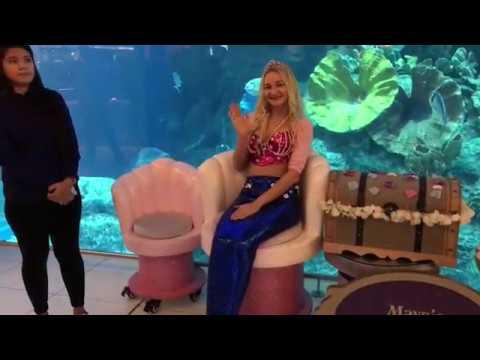 Dubai Aquarium - Fishes and Sharks experience - Underwater