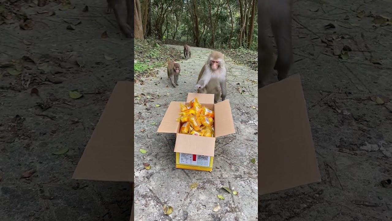Monkey Bread Party II