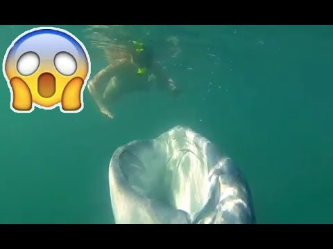 Hungry whale shark devours plankton