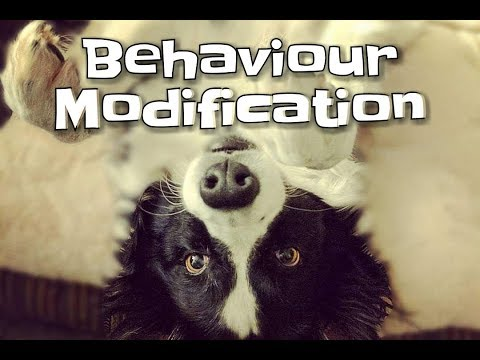 All About Behaviour Modification With Dogs