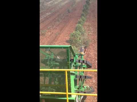 BZE Duboisia Harvester 1