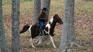 روی مور، نامزد جمهوریخواه آلاباما سوار بر اسب به حوزه رایگیری رفت…