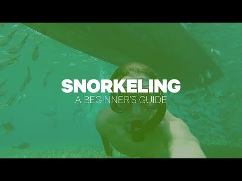 Snorkeling: A Beginner's Guide