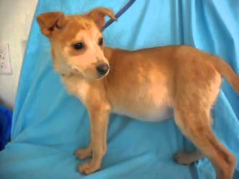 Meet Mary Kate a Terrier, Patterdale currently available for adoption at Petango.com! 3/3/2011 10:25