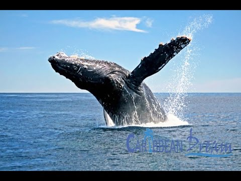 Whale Watching in Samana by Bus | Punta Cana Tours