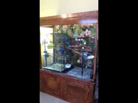 Home-Made Bird Cage Hutch