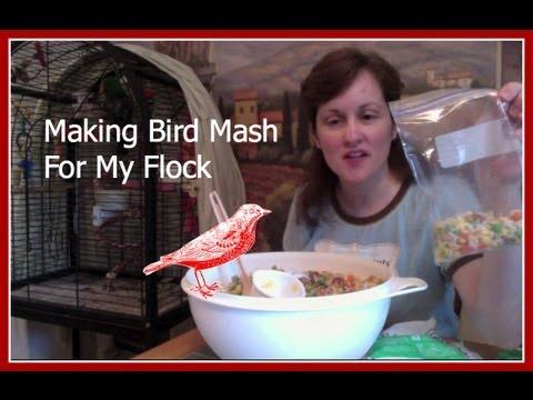 How To Make Bird Food Mash - Pets - JendisJournal