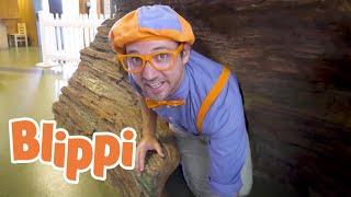 Blippi Explores A Children's Museum | Educational Blippi Videos