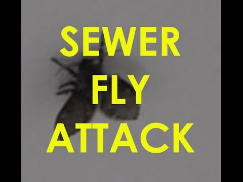Sewer Flies