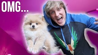 I JUST BOUGHT A PUPPY! **not clickbait**