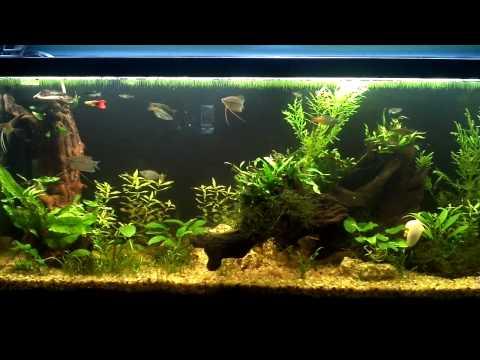 New Coralife T5HO 108 watt fixture