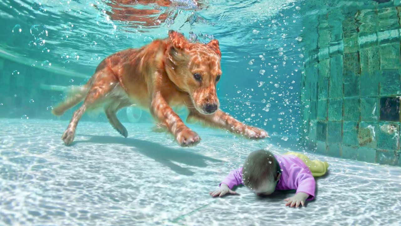 12 Animal Heroes That Saved People's Lives
