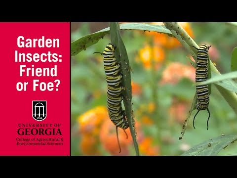 Managing Garden Insects Begins with a Question: Friend or Foe?