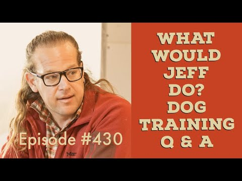Puppy growls at dogs   Stop dog jumping   What Would Jeff Do? Dog Training Q&A #430